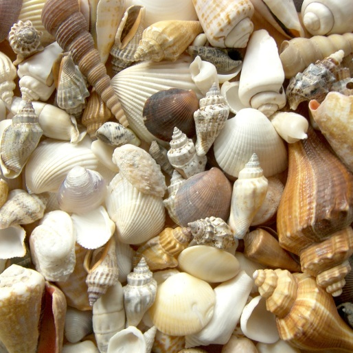 Group of shells
